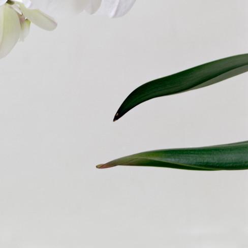 orquidea_2_1_04.jpg