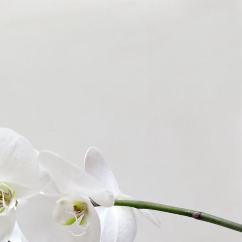 orquidea_2_1_02.jpg