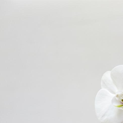 orquidea_2_1_01.jpg