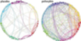 brain-networks_edited.jpg