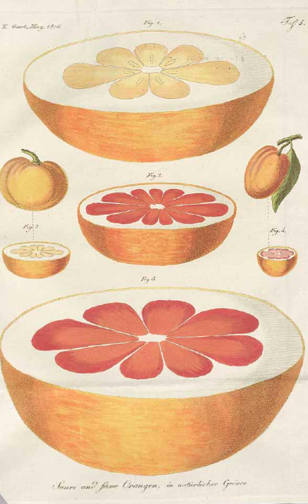 grapefruit_edited_edited.jpg