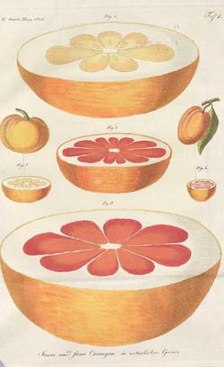 grapefruit_edited_edited.jpg