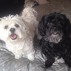 Carlito and Niko