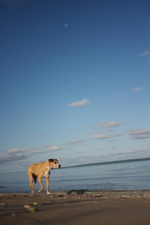 Frannie, Jax and I take a break on a sand dune.