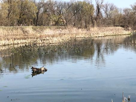Dog Adventures at John Heinz National Wildlife Refuge