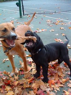 Bently and Duke