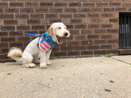 Why you should obey leash-laws in Philly