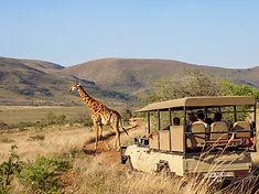 Nkomazi-Private-Game-Reserve_Giraffe-2-1