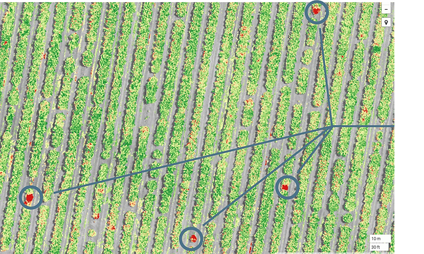 phytophthora-multispectral-imagery.png