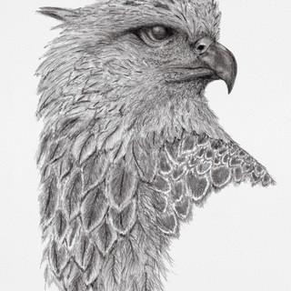 Hawk small.jpg