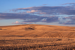 East of Scobey, MT