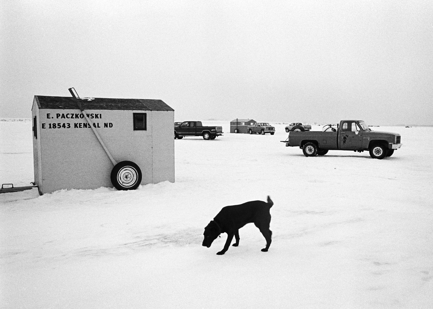 Ice Fishing Dog