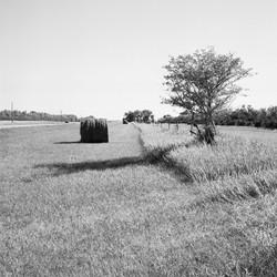Near Dead Buffalo Lake