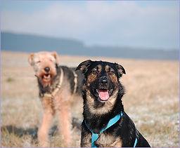 zwei Hunde beim Training