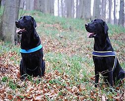 zwei schwarze Hunde im Wald