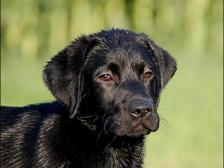 Woran erkenne ich, dass mein Hund Gift gefressen hat?