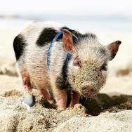 Trudi at the beach