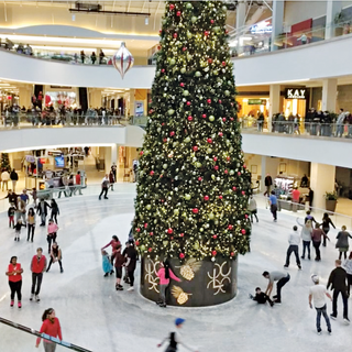 Ice Rink with Tree 2.png