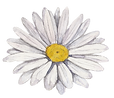 White%20Flower_edited.png
