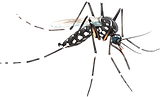 mosquito_PNG18159_edited.png