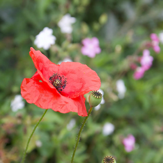 Pollinatory.jpg