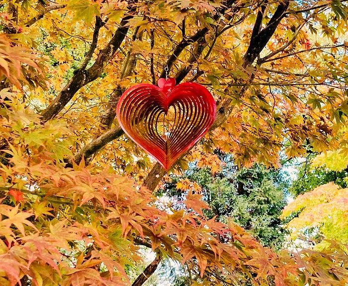 heart_edited_edited_edited.jpg