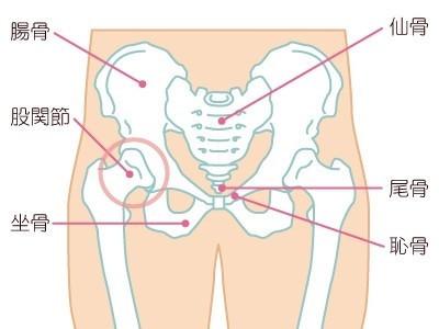 骨盤と歩くの関係