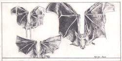 Batcow (pencil drawing)