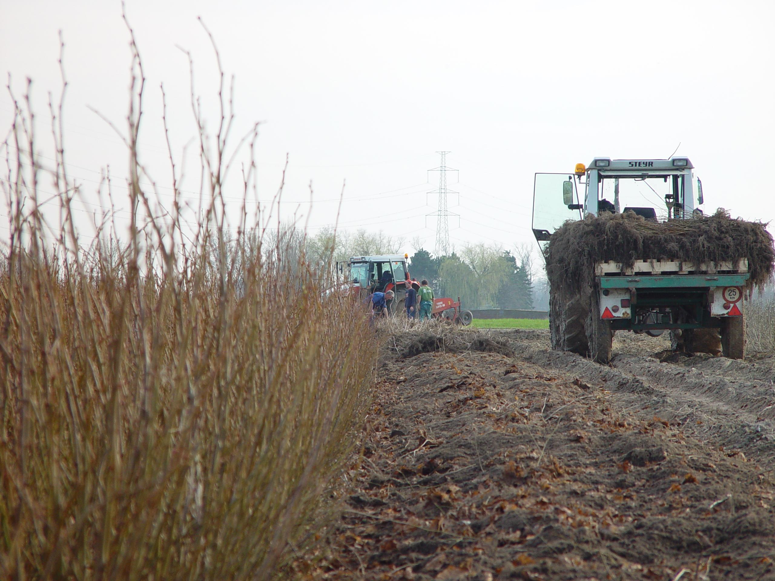 transport bosplanten 3.jpg