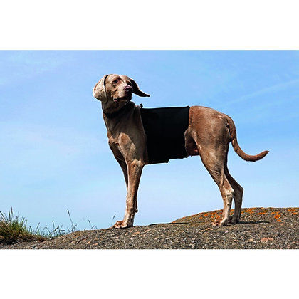 Ceinture Lombaire chien