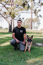 presidential_k9_los_angeles_dog_training_professional_puppy_elevated_off_leash_sit_means_s