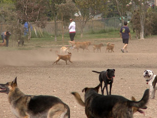 Playing By The Rules: Dog Park Etiquette