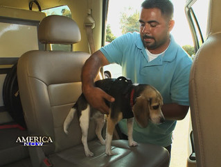 CAR SAFETY FOR CANINES