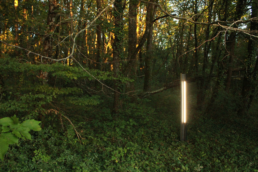 ©Tim_Somers_-_Forest_Light_-_2020.3.JPG