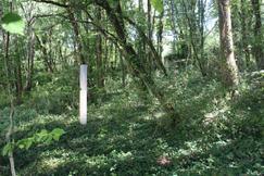 Forest Light implementation in France