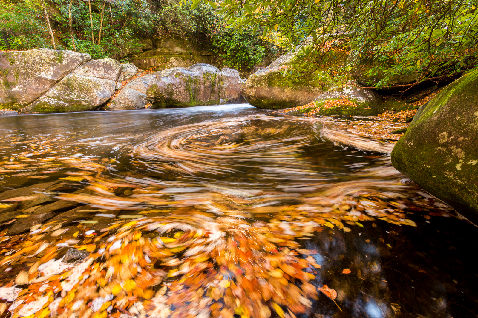 Big Creek Autumn Leaves