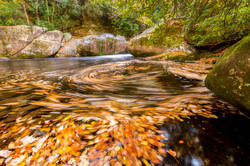 Big Creek Autumn Leaves