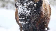 Winter Yellowstone Photography Strategies