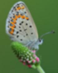 blue butterfly .73 x 1 _A9I8382 web.JPG