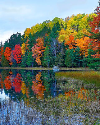 fall color for web site.JPG