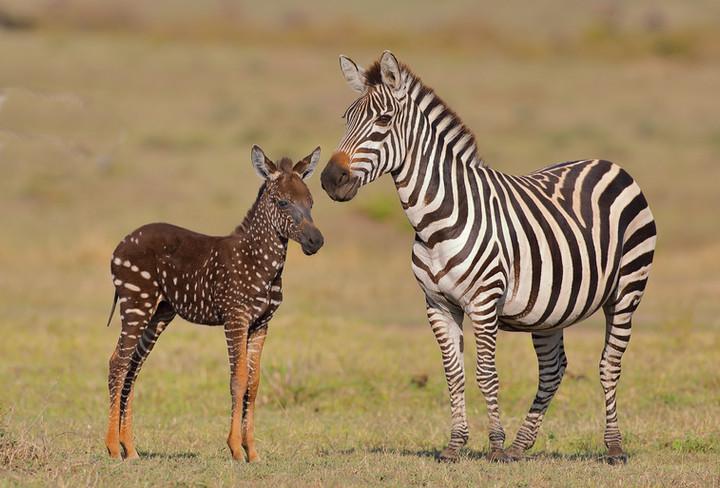 Kenya Photo Strategies