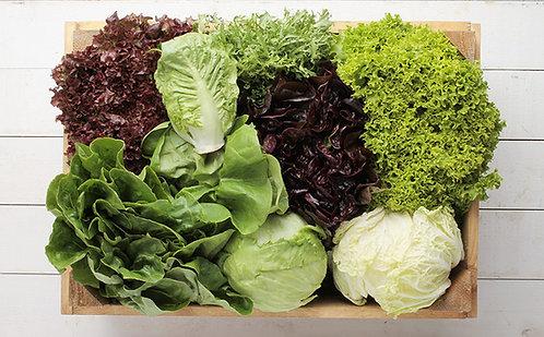 Lettuce - per piece