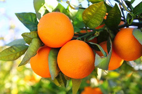 Premium Table Navel Oranges - 1kg