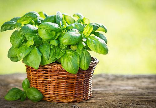 Basil - per plant
