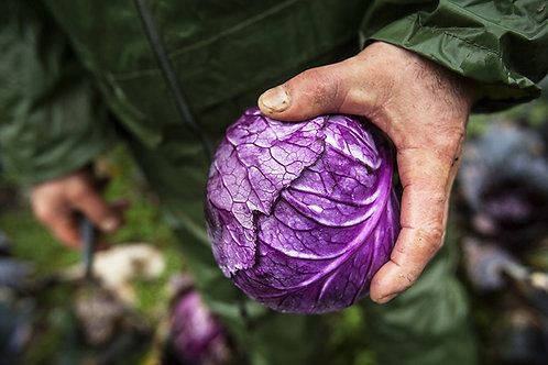 Red cabbage - per piece