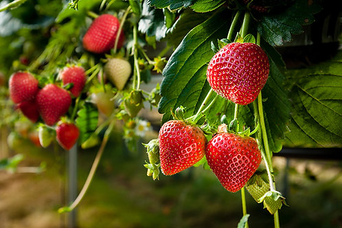 Strawberries - 250g