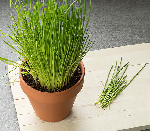 Chives - per plant