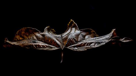 Lost leaf...
