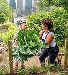 Community Garden melbourne community hea