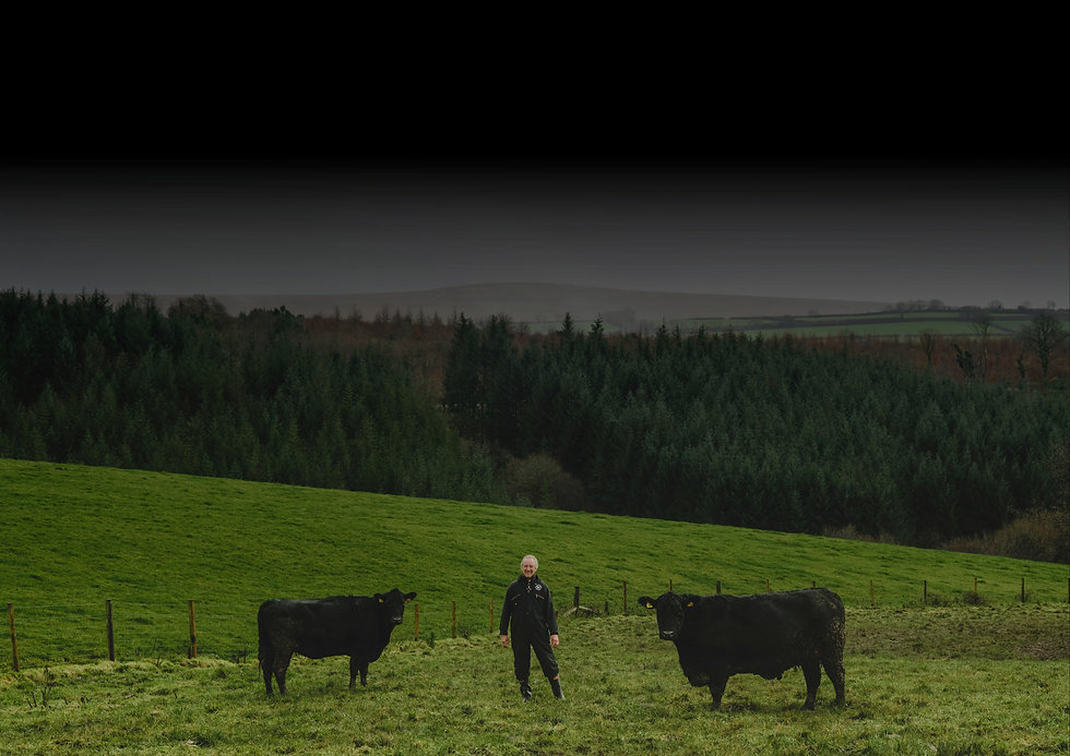 DAVID WITH COWS.jpeg